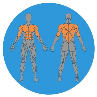 Bauchroller - Der ultimative Guide zum Sixpack! (Mit Trainingsplan)